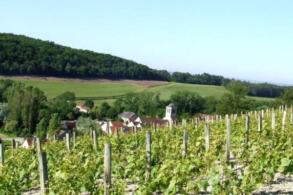 Chaumont le Bois et son vignoble - Domaine Bouhelier