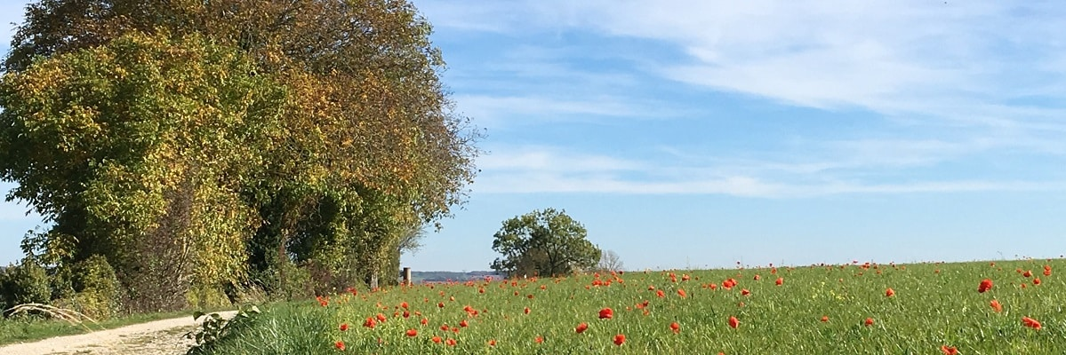 paysage coquelicots 1200x400